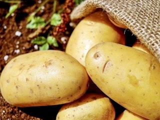 Potatoes vegetables erdfrucht bio 162673