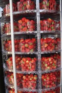 Aardbeien Vervaet - van Eetvelde
