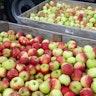 fruitkwekerij Coppens