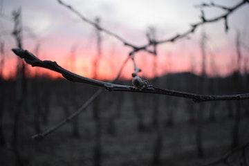 Winter,zonsopkomst